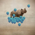 We are delighted to announce the overall winner for the MIRA Mobile Prize is Janine Graf with her rhino image with blue balloons. This photograph was chosen from the shortlist […]