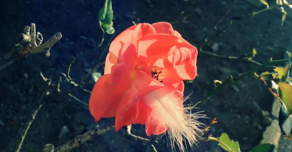 Screen Shot 2014-09-13 at 11.55.14