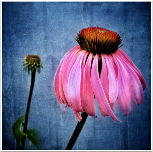 TheAppWhisperer – Mobile Macro Photography Interview with Meri Walker @iPhoneartgirl