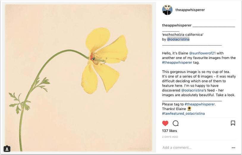 Mobile Photography – Instagram TAKEOVER with @sunflowerof21 – Elaine Taylor – Days 1 – 4